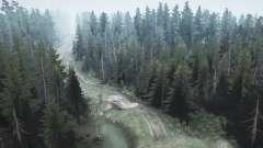 Floresta de pinheiros 2