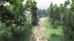 Reservados floresta para Spin Tires